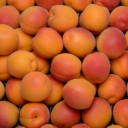 Abricot Catégorie 1