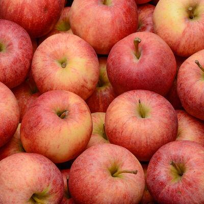 Pomme royal gala, calibre 190/215, catégorie 1,France (en Mayenne), la pièce
