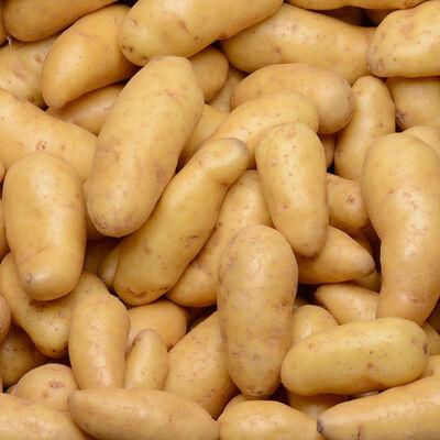 Pomme de terre grenaille Ratte, de consommation à chair ferme, calibre18/32g, catégorie 1, France