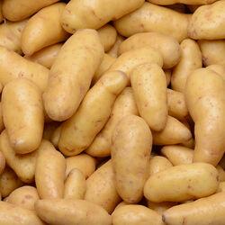 Pomme de terre ratte du Touquet, de consommation à chair ferme, calibre 18/32G, catégorie 1, France.