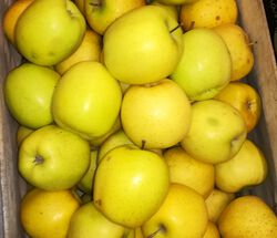 *POMME VERGERS FAGUSSIENS GOLD