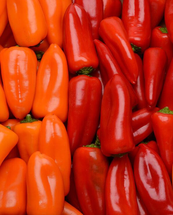 Petits poivrons à farcir 3 couleurs(jaune,orange,rouge), catégorie 2,France