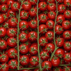Tomate cerise, segment Les cerises rondes grappes, BIO, catégorie 2, Espagne