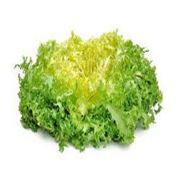 Salade Frisée, la pièce origine france