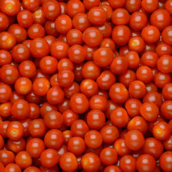 Tomate cerise, segment Les cerises allongées, BIO, catégorie 2, Espagne