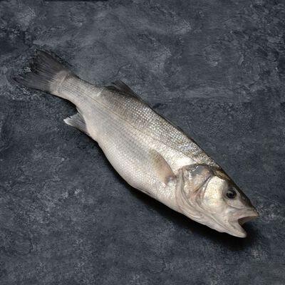 bar bio, Dicentrarchus labrax, calibre 400/600g, issue de la pisciculture biologique, élevé en Grèce