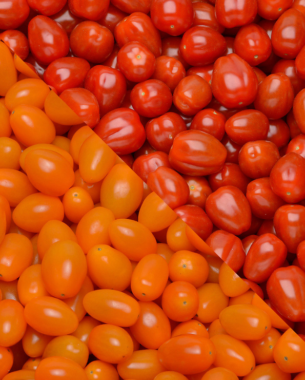 Tomate cerise, segment les cerises rondes grappes, Ciliegino, catégorie 1, Italie, barquette de 500g