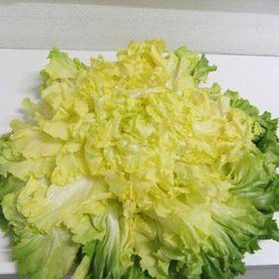 Salade Scarole - la pièce - France - cat 1 -