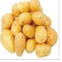 Pomme de terre  AGATA  filet 2,5kg