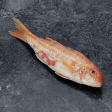 Rouget barbet, Mullus Barbatus, pêché en Atlantique Nord-Est