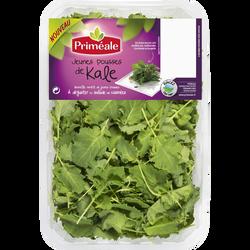 Jeune pousse de kale, Italie, barquette, 125g