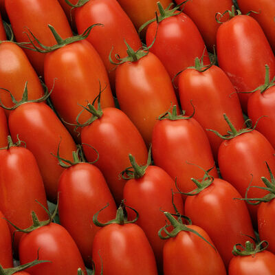 Tomate allongée olivine, Catégorie 2, France, 500g