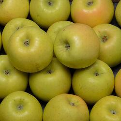 Pomme Opal, BIO, calibre 136/165g, catégorie 2, France, barquette 4 fruits