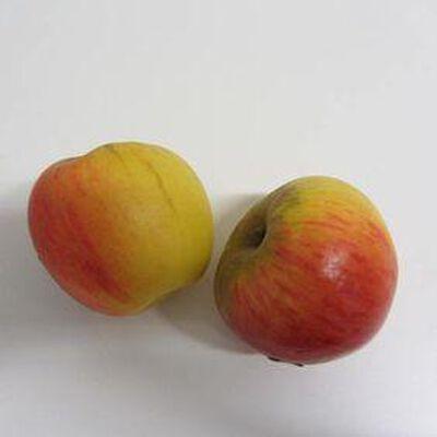 Pomme Reine des Reinettes - France - cat 1 - cal 65/70 -