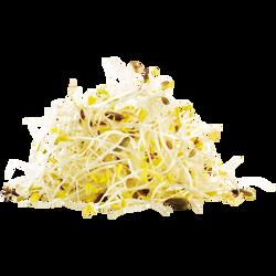Graines germées de Luzerne et de Fenouil, barquette 50g
