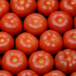Tomate pleine terre, segment Les Charnues, rose, calibre 57+, catégorie 1, France