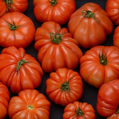 Tomate, segment Les Côtelées, marmande noire, SAVEURS DU BOUT DU MONDE, catégorie 2, France