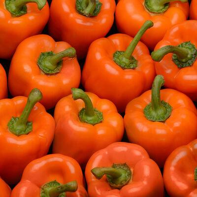 Poivron orange, Espagne