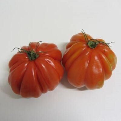 Tomate coeur de boeuf BIO - cat 2 - France