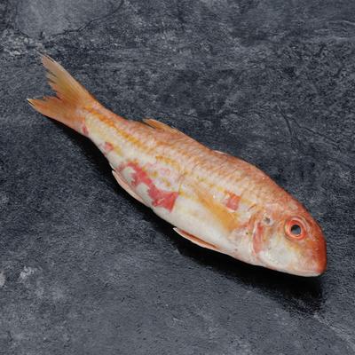 Rouget barbet de roche, Mullus surmuletus, calibre 80/100g, pêché en Mer Méditerranée