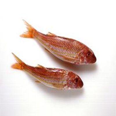 Rouget Barbet, Pêché en Atlantique Nord-Est, Mullus Surmuletus