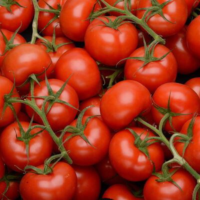 Tomate ronde, segment les grappes, BIO, catégorie 2, Espagne