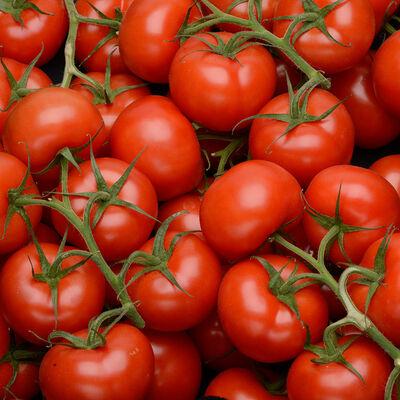 Tomate ronde en grappe, segment Les grappes, BIO, calibre 47/+, catégorie 2, Espagne
