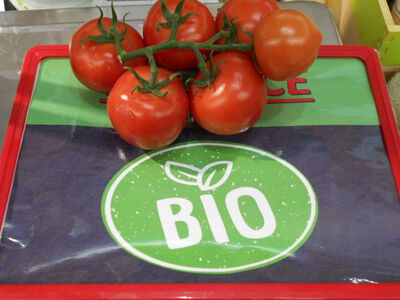 TOMATE RONDE GRAPPE ROUGE BIO