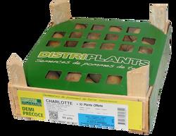 Semence Charlotte clayette 60 plants calibre 25/32 + 10 plants offerts