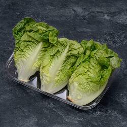Salade sucrine, catégorie 1, France, sachet 3 pièces