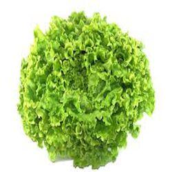 Salade Batavia, la pièce origine france
