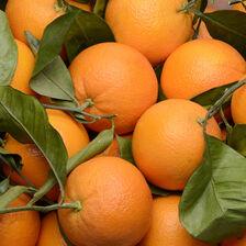 Orange à feuilles, calibre 2, catégorie 1, Italie à la pièce