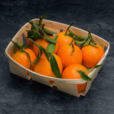 Clementine à feuille, BIO, calibre 4/5, catégorie 2, France, barquette500g