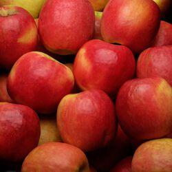 Pomme Cripps Pink Pink Lady, Calibre 136/180, Catégorie 1, France, Barquette 6 fruits