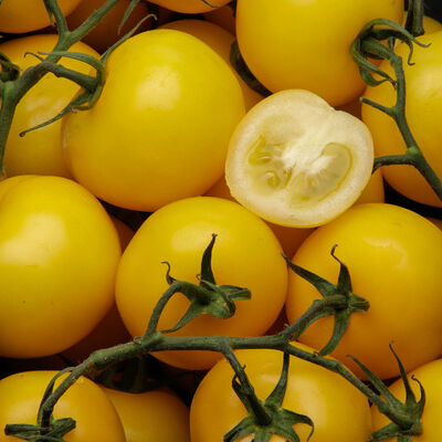 TOMATE JAUNE ANANS VIALE DUMAY