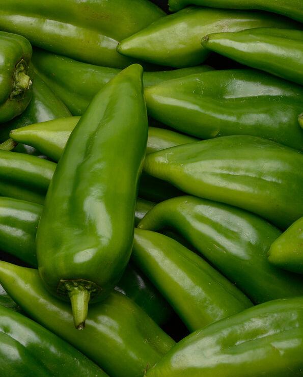 Poivron vert Corne de Boeuf, calibre 50/55, catégorie 1, Maroc
