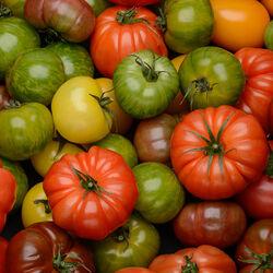 Mélange de tomates anciennes, catégorie 2, Espagne