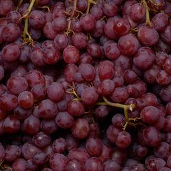 Raisin red globe, Calibre 50/30, Catégorie 1, Italie, 500g