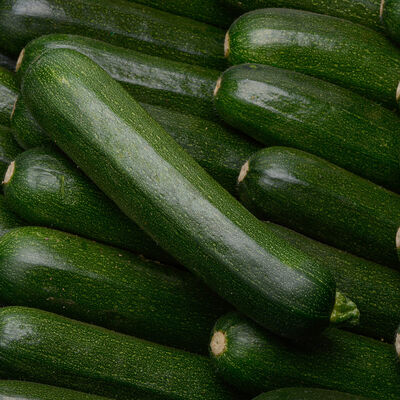 Courgette, France