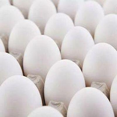 6 oeufs blanc gros