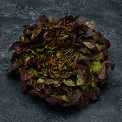 Salade multifeuille rouge, France, la pièce