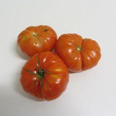 Tomate Merinda - Italie - cat 1 -