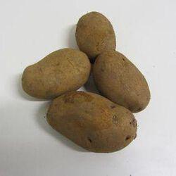 Pomme de terre nouvelle BIO - chair ferme -  cat 2 - cal +60 - France