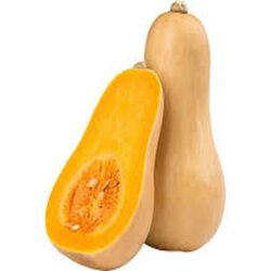 Butternut origine france
