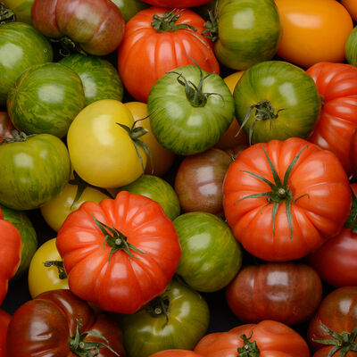 Tomate Cotele d'Antan