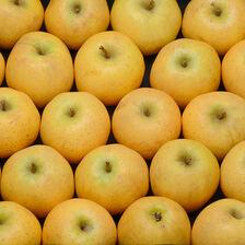 Pomme chantecler, calibre 170/220, catégorie 1, France à la pièce