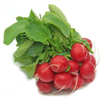 Radis rouge botte, origine Italie
