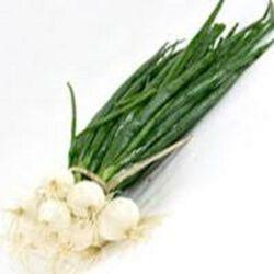 Oignon Blanc, la botte origine france