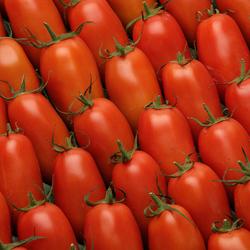 Tomate allongée, segment Les allongées, calibre 57/67, catégorie 1, France