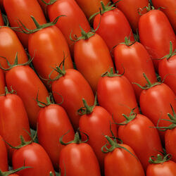 Tomate allongée, segment Les allongées, romaine, SAVEOL, calibre 47/57, catégorie 1, France